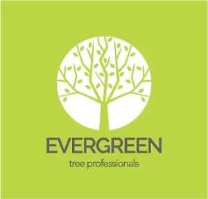 Evergreen Tree Professionals Carrington Newcastle Area Preview
