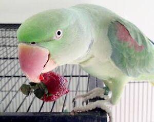 BIRDS FOR SALE Queanbeyan Queanbeyan Area Preview