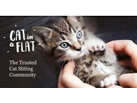 Trusted Cat Sitting Service in the Great Yarmouth/ Caister area