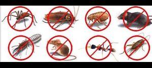 Pest Control & Pest management Inside & Outside $99 Cannon Hill Brisbane South East Preview