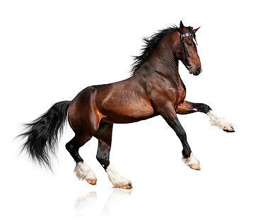 Einkaufsratgeber zum Zusatzfutter für Pferde