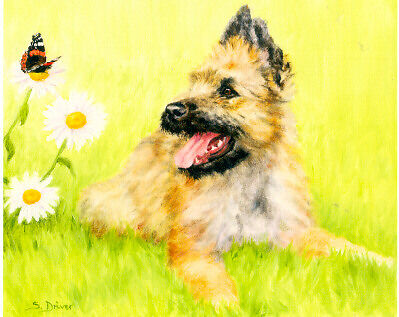 Belgian Shepherd Laekenois Limited Edition Art Print by Driver Who Are You? #10*
