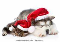 Book Now for the Holidays Dogs and Cats @ Adore Paws Grooming!