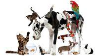 Taylor's Pet Care services