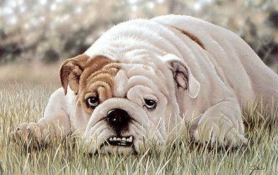 BULLDOG ENGLISH BRITISH DOG ART LIMITED EDITION PRINT