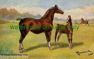 Vintage Art-N.Drummond~Hackney Mare & Foal Horse Horses NEW Large Note Cards