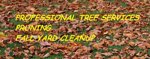 PROFESSIONAL TREE SERVICES/PRUNING/FALL YARD CLEANUP Kitchener / Waterloo Kitchener Area image 1