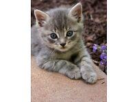 two female kitten left £70 each