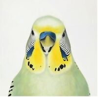 Sask Budgie Orphanage & Rescue