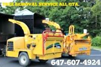 Affordable Tree removal 647-607-4924.
