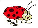 ladybug942