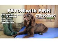'FETCH with FINN' dog walking/running/training & Pet Sitting ##Trustworthy- experienced- insured##