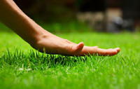 Grass Cutting and Lawn Care services