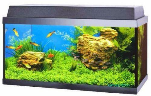 Juwel tropical fish tanks ebay for Fish tanks for sale ebay