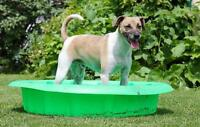"""Adult Male Dog - Jack Russell Terrier-Whippet: """"Nemo"""""""