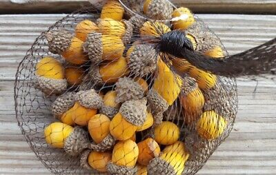 Fall Vase Fillers (Fall Thanksgiving Vase Filler Table Scatter Clean Wood REal Caps Acorn)