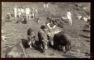 BAGUIO, PHILIPPINE IS. ~ NATIVE PEOPLE AT PIG MARKET ~ REAL PHOTO ~ 1930-1940's