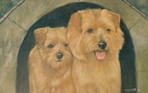 Norfolk Terrier Limited Edition Art Print Kennel Club by Steven Nesbitt*