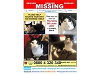 Lost black and white cat - £200 reward. Called Thor, very timid