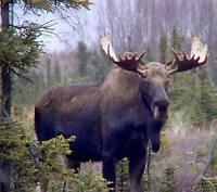 Moose & Deer Camp -Looking for 1 or 2 additional members.
