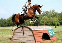 Cute competitive pony seeks rider!