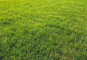 Lawns mowed from just $25! Stanhope Gardens Blacktown Area Preview