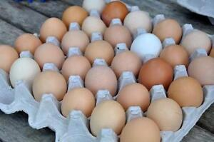 Free Range Eggs for Sale in Kelowna