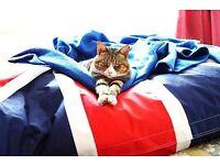 MISSING - Female golden tabby cat