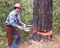 Tree Cutting, Hedging, Pruning, Removal and Other