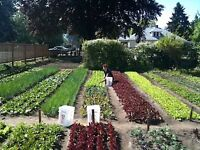 Let me use your garden in exchange for weekly vegetables! Gardening maintenance Service Vegetables