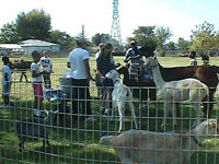 Mobile / Traveling petting / animal zoo for birthdays, corporate