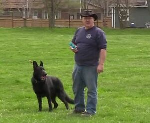 Dog Training - START Obedience Program London Ontario image 3