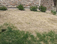 London Sod Installation - Residential and Commercial