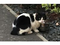 Found Black and white cat on Oakley Vale estate Corby