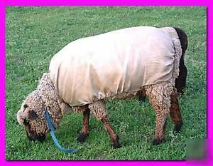 Sheep Wool (Covered) Fleeces for sale