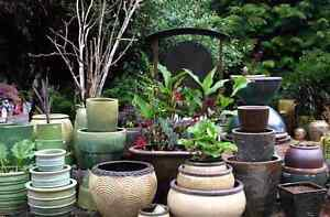 WANTING TO BUY: Small-Medium pots or glass bowls. Woodberry Maitland Area Preview