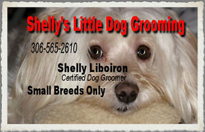 Shelly's Little Dog Grooming Regina Regina Area image 1