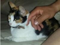 2years old Female Cat