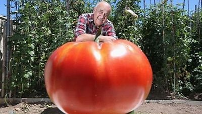 15 GIANT TOMATO SEEDS 2018 OVER 7LBS POSSIBLE!