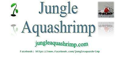 JungleAquaShrimpandPlant