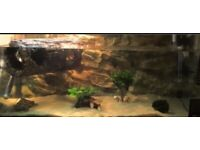 Interpet Aquaverse Glass Aquarium & Cabinet - 110L with Fluval 207 External Canister Filter