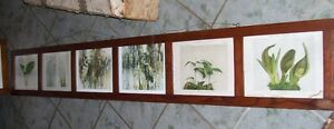 Very Long  Victorian Frame with Flower Bird Prints