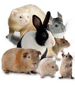Reliable, Loving Pet Sitting / Boarding for Small Animals