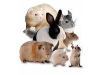 Pet Sitting Service for Small Furries (Bar Hill & Surrounding Areas)