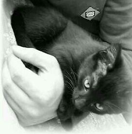Two beautiful kitten