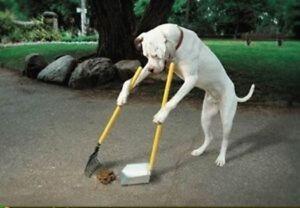 DOG POO, WASTE, POOP , CRAP SPRING CLEAN UP