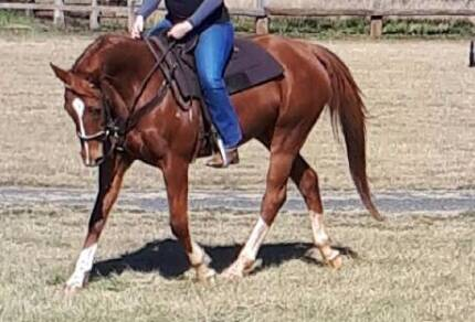 Thoroughbred mare: A League Of Her Own (Izzy)