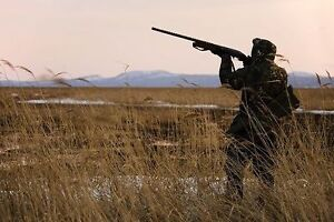 Do you have a land to rent for Hunting?
