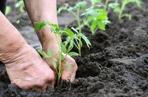Get those gardens looking good again Warnbro Rockingham Area Preview