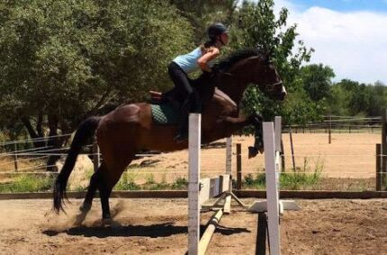All-Rounder STB Gelding  Albany 6330 Albany Area Preview